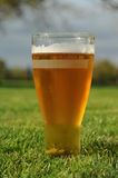 Beer in the garden. Photograph of a pint of beer taken in the garden using natural light Royalty Free Stock Images