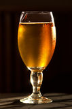 Beer Glass stock image