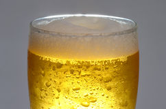 Beer is in glass Stock Photography