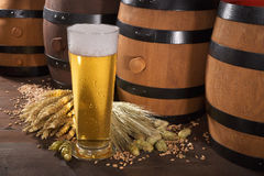 Beer glass. Beer barrels, hops, wheat, grain, barley and malt Royalty Free Stock Images