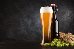 Beer glass on dark background Stock Images
