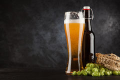 Beer glass on dark background. Beer glass and bottle with malt and hops, dark background Stock Photo