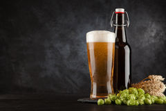 Beer glass on dark background Stock Photos