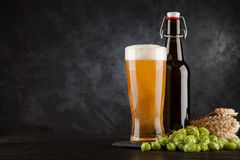 Beer glass on dark background Stock Image