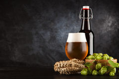 Beer glass on dark background. Beer glass and bottle with malt and hops, dark background Stock Photos