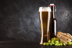 Beer glass on dark background. Beer glass and bottle with malt and hops, dark background Royalty Free Stock Photography
