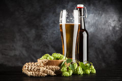 Beer glass on dark background. Beer glass and bottle with malt and hops, dark background Royalty Free Stock Photo