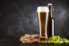 Beer glass on dark background. Beer glass and bottle with malt and hops, dark background Stock Image