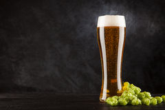 Beer glass on dark background. Beer glass with malt and hops, dark background Stock Photo