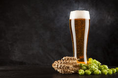 Beer glass on dark background. Beer glass with malt and hops, dark background Royalty Free Stock Photos