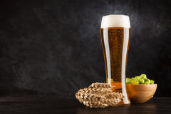 Beer glass on dark background. Beer glass with malt and hops, dark background Stock Images