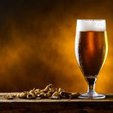 Beer glass with dark cold beer with bubble froth and peanuts on. The table royalty free stock images