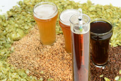 Beer in glass with grain and hops with hydrometer. Three beer styles with various colors of grain and hops with hydrometer Stock Photo