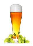 Beer glass with hop. Beer glass with fresh green hop royalty free stock images