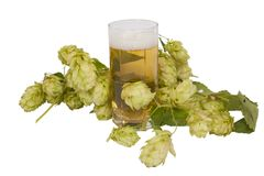 Beer in glass with hop cones Stock Photos