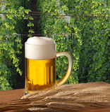 Beer glass with hop field Royalty Free Stock Photography