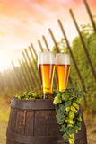 Beer glass with hop-field on background. Beer glass served on wooden desk with keg. Hop-field on background Stock Image