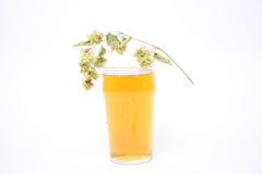 Beer glass with hops Stock Photos
