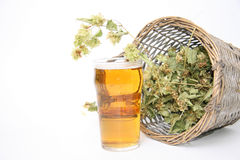 Beer glass with hops Royalty Free Stock Image