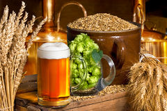 Beer glass with hops and barley. In the brewery royalty free stock images