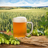 Beer Glass With Hops And Barley Royalty Free Stock Photo