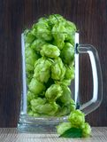 Beer glass with hops close up Royalty Free Stock Images