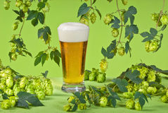 Beer glass with hops Stock Images