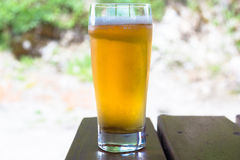 Beer in glass. Royalty Free Stock Photography