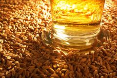 Beer glass. Macro view of a beer glass with wheat, grain, barley, malt Royalty Free Stock Photos