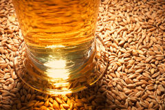Beer glass. Macro view of a beer glass with wheat, grain, barley, malt Royalty Free Stock Photography