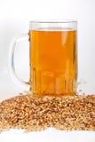 Beer glass. At malt grains on white background Stock Image