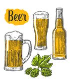 Beer glass, mug, bottle, hop. Vector vintage engraved illustration isolated on white background Royalty Free Stock Photo