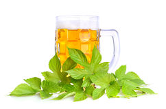 Beer in a glass mug Stock Image