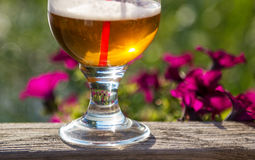Beer glass in nature Stock Image