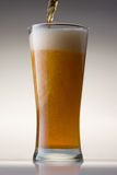 Beer Glass Stock Photos