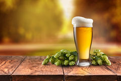 Beer glass served on wooden desk. Hop-field on background Stock Images