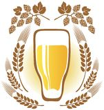 Beer glass. And wheat ears on a white background Royalty Free Stock Photography