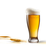 Beer in glass and wheat isolated on white Stock Photography