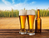 Beer glasses with hop-field on background Royalty Free Stock Photos