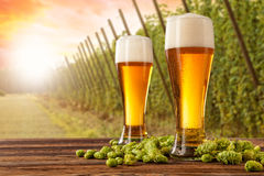 Beer glasses with hop-field on background Stock Photo