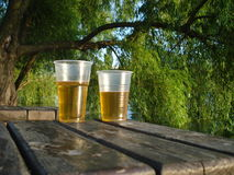Beer glasses on wooden table under willow tree Stock Photos