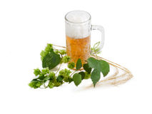 Beer glassware with beer, branch of hops, ears of barley Royalty Free Stock Image