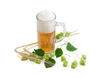 Beer glassware with beer, branch of hops, ears of barley Royalty Free Stock Photography