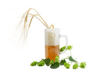 Beer glassware with beer, branch of hops, ears of barley Stock Images
