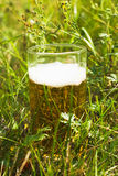 Beer in the grass Stock Image