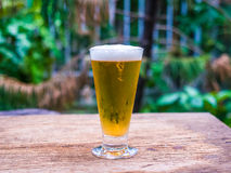Beer glass on wood background Royalty Free Stock Photos