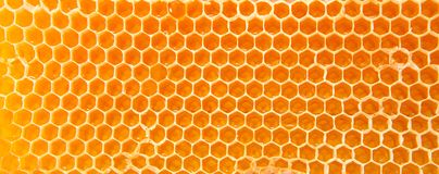 Beer honey in honeycombs. Royalty Free Stock Image