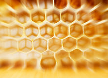 Beer honey in honeycombs. Stock Photos