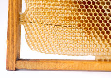 Beer honey in honeycombs. Stock Photography