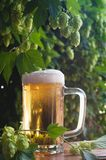 Beer and hop Stock Photography